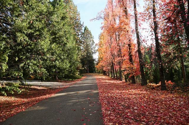 autumn-680189_640