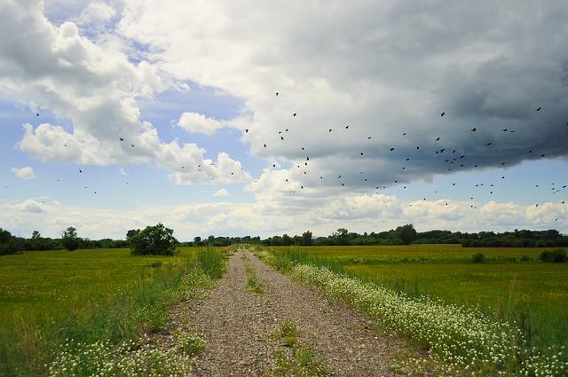 flock-of-birds-19488_640
