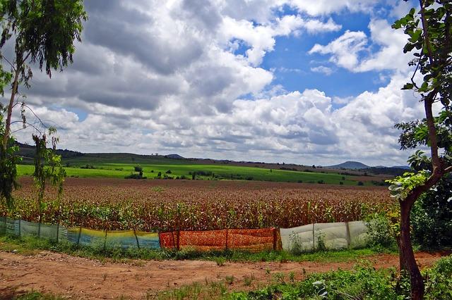 maize-cultivation-194963_640