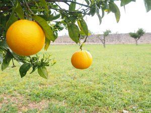 orange-1117483_640
